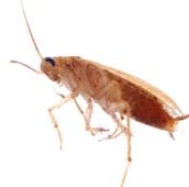 german cockroach control Georgetown