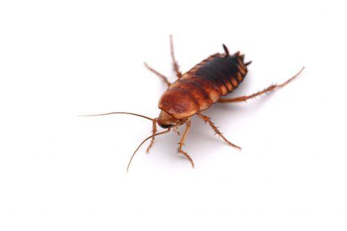 Cockroach Pest Control Georgetown